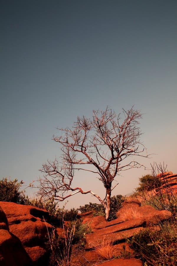 Download Sandstone rock stock photo. Image of stone, hills, sedimentary - 28769656