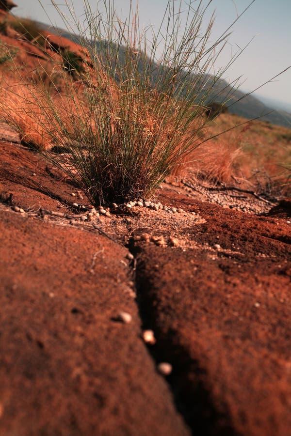 Download Sandstone rock stock photo. Image of feldspar, concreted - 28777788