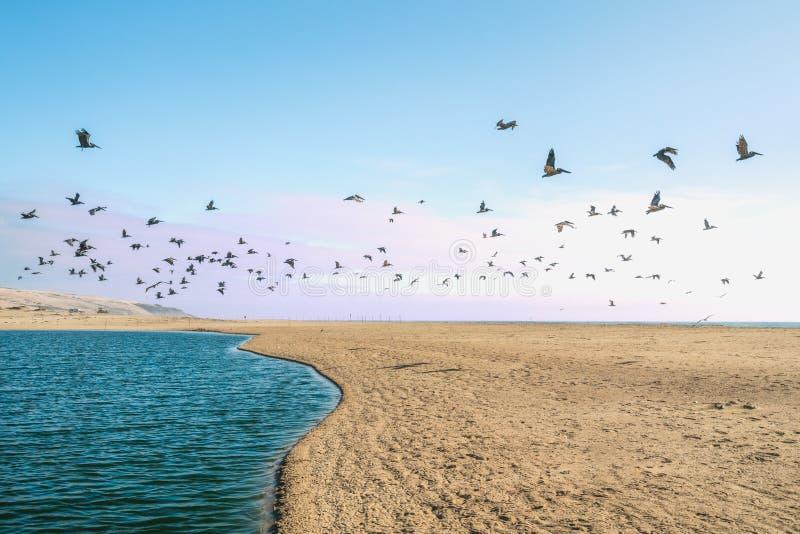 Sandstrand och flock av fåglar som flyger över havet Solnedg?ng fotografering för bildbyråer