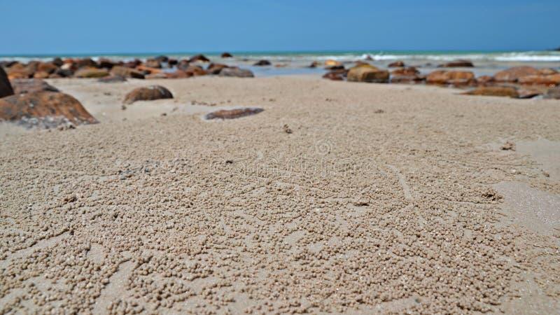 Sandtrinkwasserbrunnen-Krabbenbälle auf dem Strand stockbilder