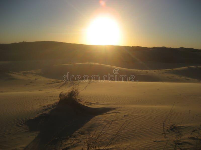 Sandune на заходе солнца стоковое изображение rf