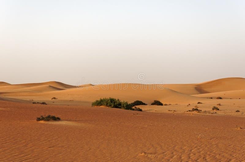 Sandwüste mit Dünen und wenigen Anlagen stockfotos