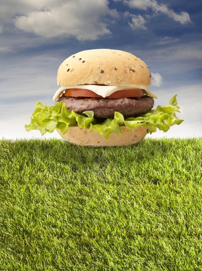 Sandwich with hamburger stock photo