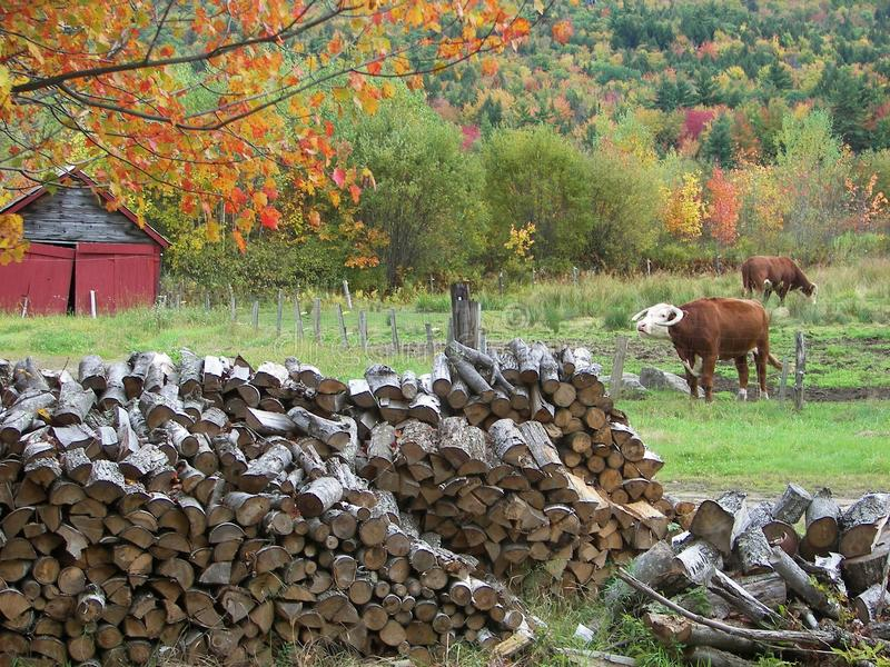 Download Sandwich, New Hampshire stock photo. Image of cattle - 10779352