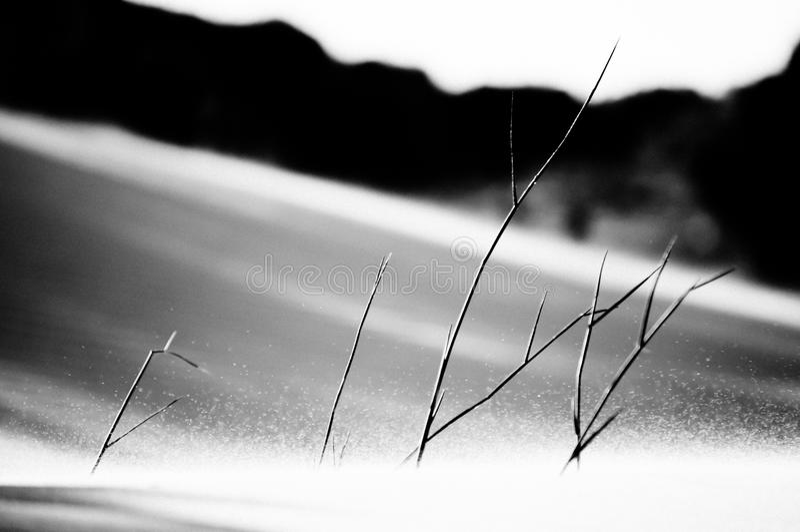 sandwind arkivfoto