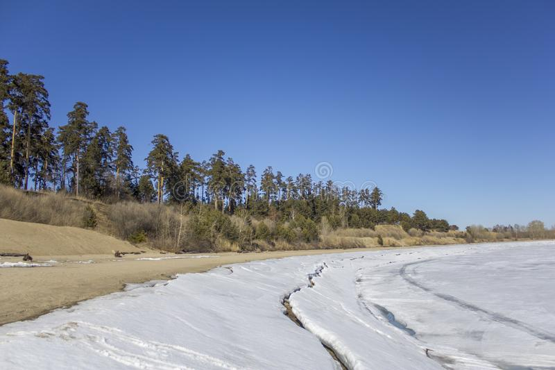 Sandy bank of a frozen river with snow and ice on the background of dry bushes and green coniferous trees under a clear dark blue royalty free stock image