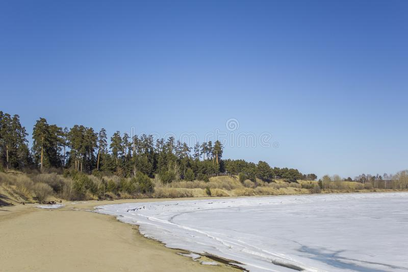 Sandy bank of a frozen river with white snow against the background of dry bushes and green coniferous trees under a clear dark stock photography