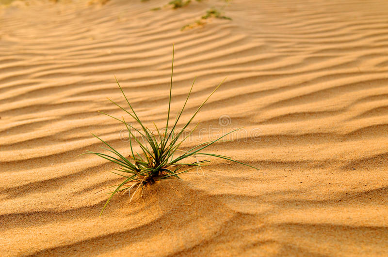 Download Sandy beach stock image. Image of beach, desert, green - 14369943