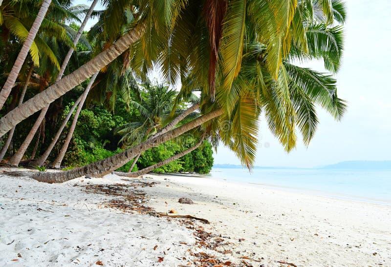 Sandy Beach branco com Azure Water com fileira de árvores de coco e de hortaliças - Vijaynagar, Havelock, Andaman Nicobar, Índia fotografia de stock royalty free