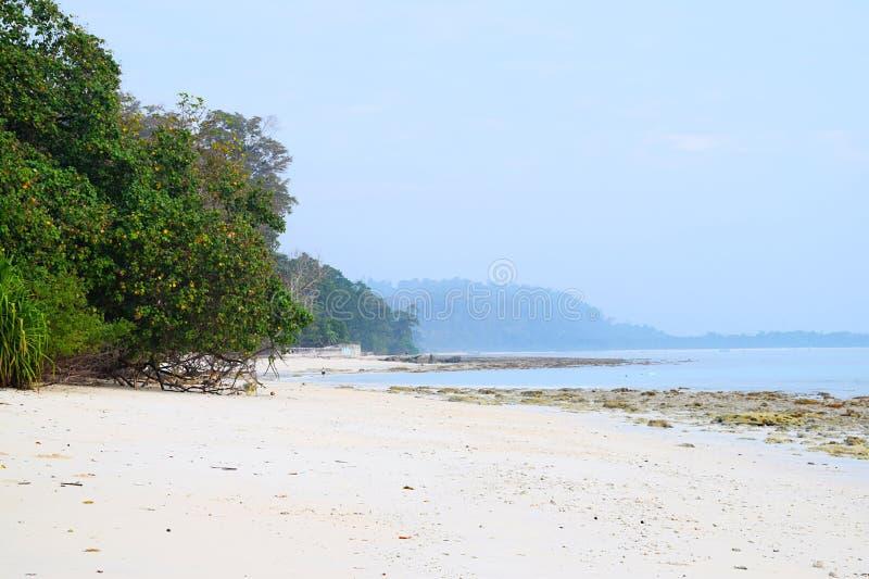 Sandy Beach branco Pristine e tranquilo com as árvores dos manguezais com Azure Sea Water e o céu claro - Kalapathar, Havelock, A fotografia de stock royalty free