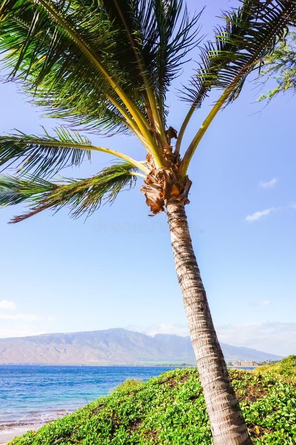 Sandy Beach com árvores de coco, Maui, Havaí imagem de stock royalty free