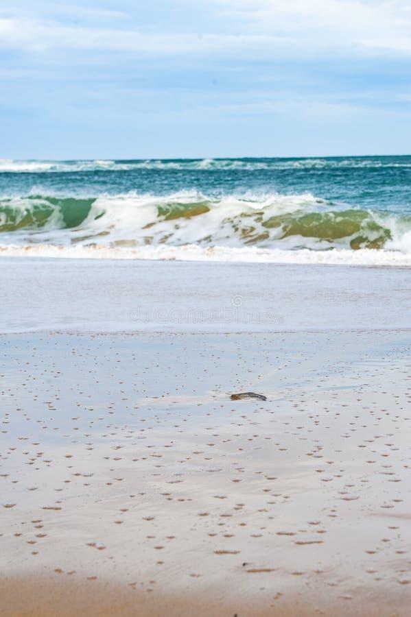 Sandy Beach com esmagamento de ondas imagem de stock royalty free