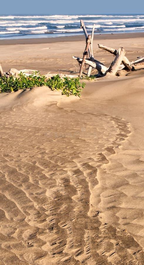Sandy Beach com madeira e plantas da tração imagem de stock royalty free
