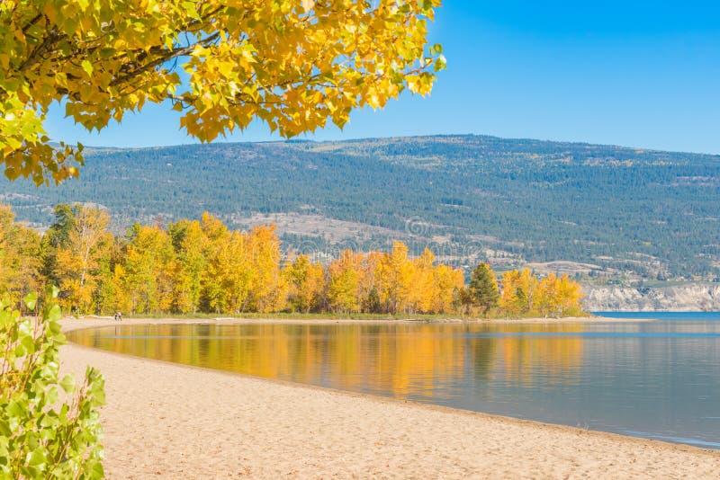 Sandy Beach e lago cercados por árvores com as folhas de outono amarelas fotos de stock royalty free