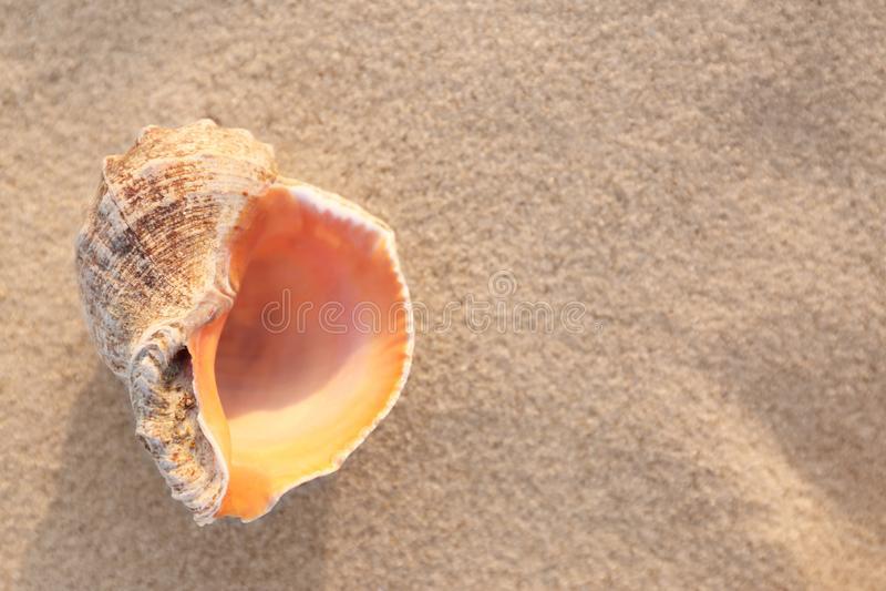 Sandy Beach ensolarado com a concha do mar bonita no dia de verão fotos de stock