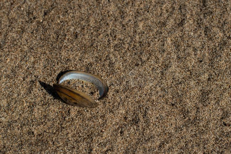 Empty clam shell on sand. On the sandy beach lies an empty clam shell royalty free stock images