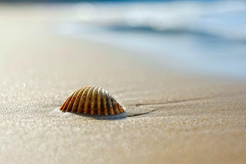 Sandy Beach na manhã imagens de stock