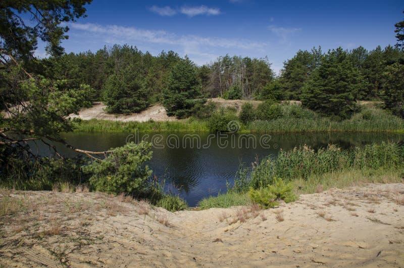 Sandy Beach no banco de um rio da floresta na perspectiva de uma floresta conífera e de um céu azul imagens de stock royalty free