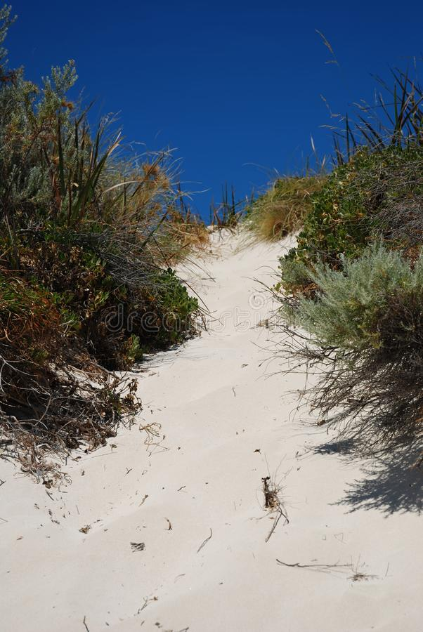 Download Sandy Beach Path fotografia stock. Immagine di percorso - 117979132