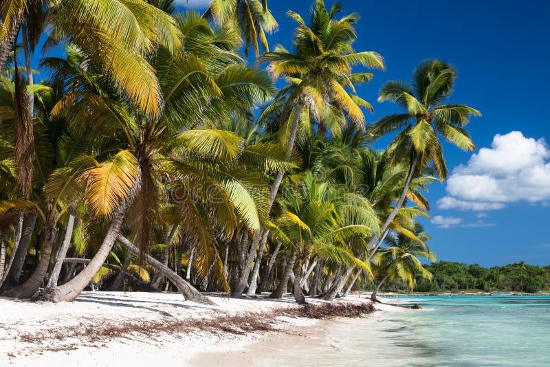 Sandy Caribbean Beach met Kokosnotenpalmen Saonaeiland, Dominicaanse Republiek stock foto