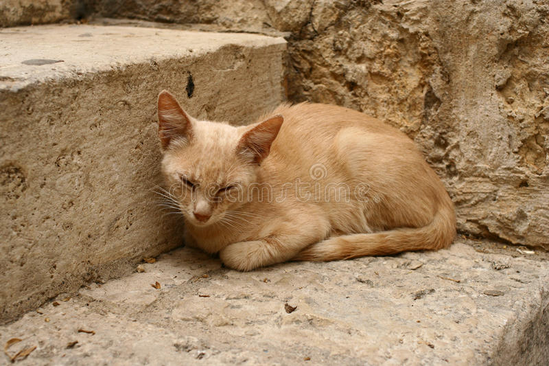 Download Sandy cat stock photo. Image of asleep, clay, adorable - 12645734