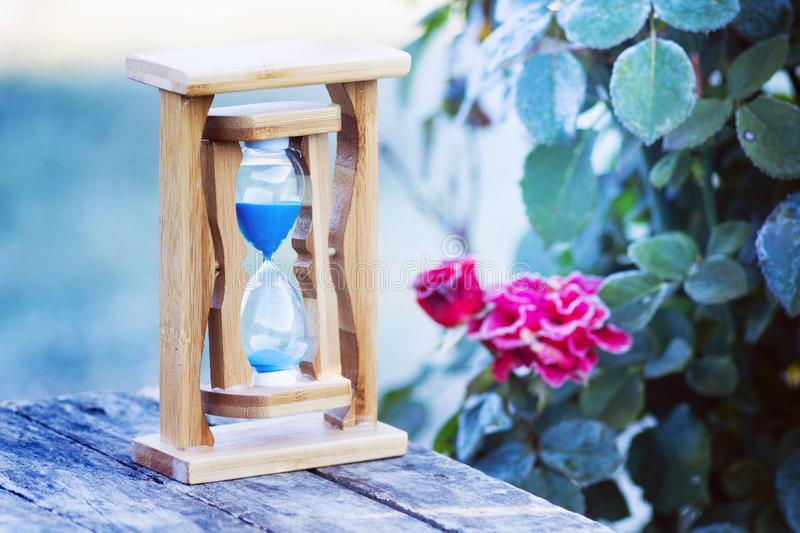 Sandy clock near roses covered with frost. Flowers in the garde. N fade. Time is running fast, everything goes away royalty free stock photo