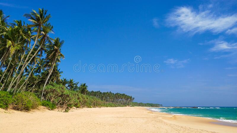 Sandy deserted paradise beach with palm trees on the ocean.  royalty free stock image