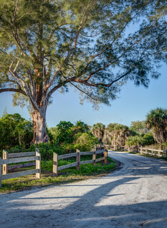 Sandy Florida road leads through cabbage palms in Florida at dawn. On Manasota Key stock photos