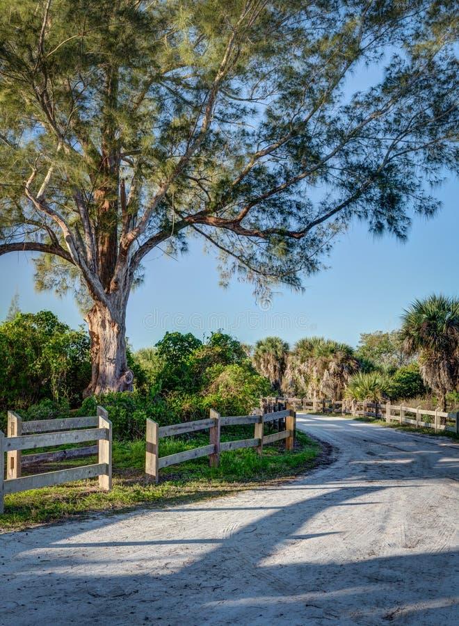 Sandy Florida-Straße führt durch Kohlpalmen in Florida an der Dämmerung stockfotos