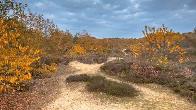 Sandy Footpath sulla heathland, in colori autunnali gialli fotografie stock libere da diritti