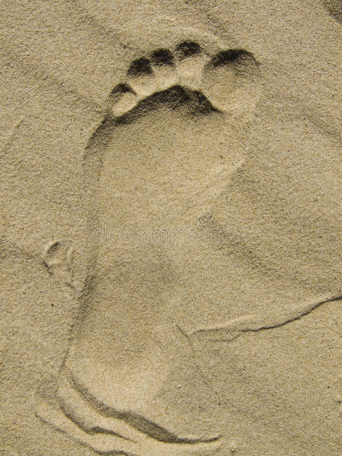 Download Sandy Footprint stock image. Image of heel, print, toes - 10547761