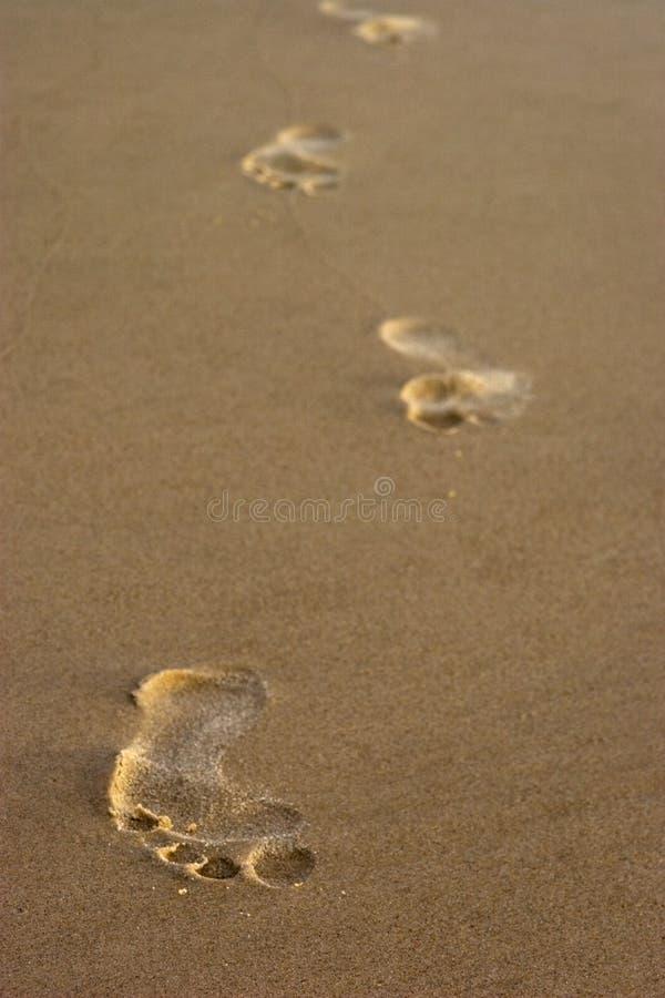 Download Sandy Footprints stock photo. Image of shore, ocean, feet - 13229366