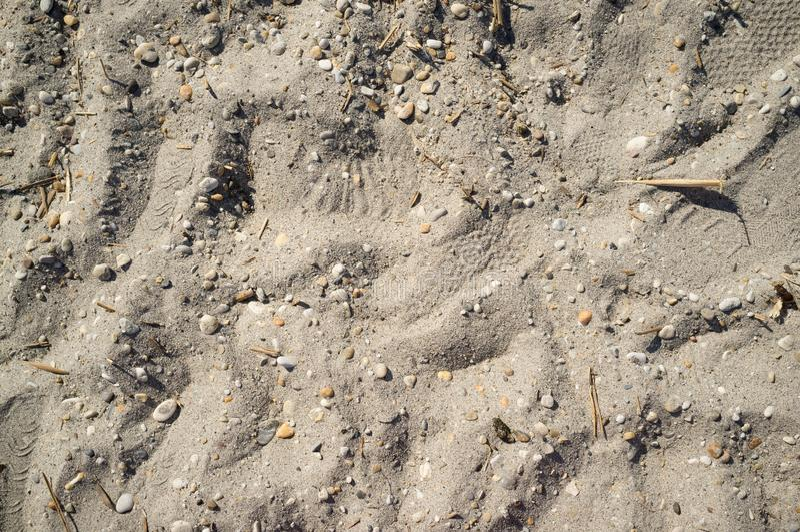 Sandy Lakeside dichtbij Neusiedlersee met Kleine Rotsen stock fotografie