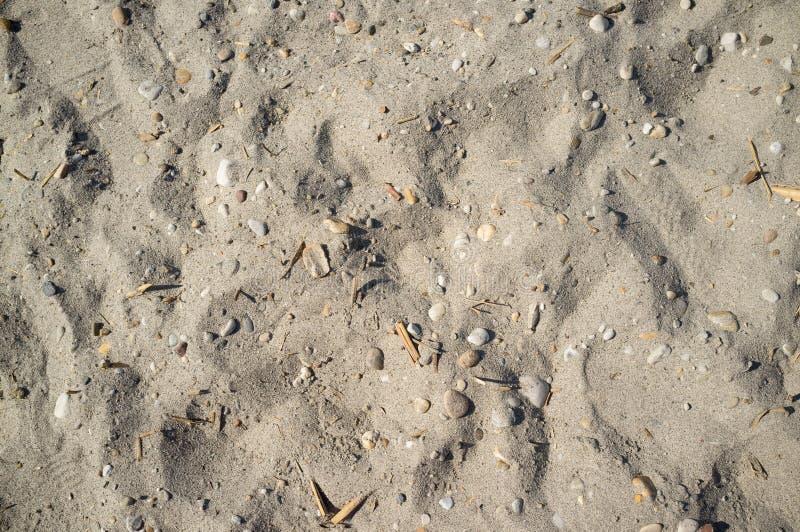 Sandy Lakeside perto de Neusiedlersee com rochas pequenas imagem de stock