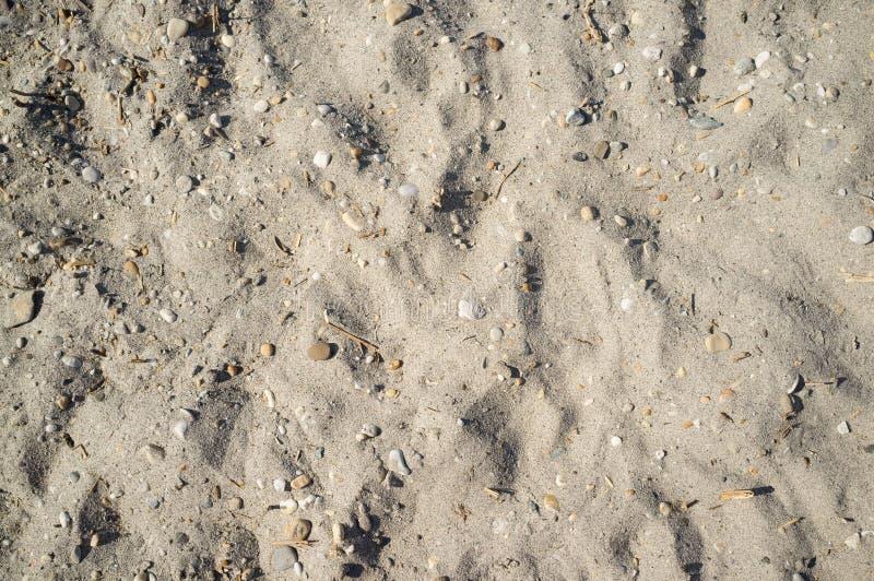 Sandy Lakeside pr?s de Neusiedlersee avec de petites roches image libre de droits