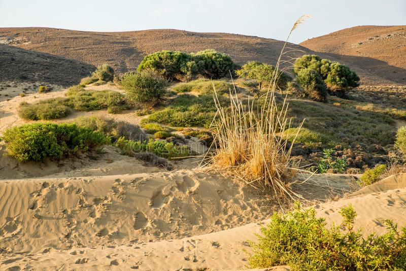 Sandy landscape with dry grass, pine and hill. Island Lemnos, Greece. royalty free stock photography