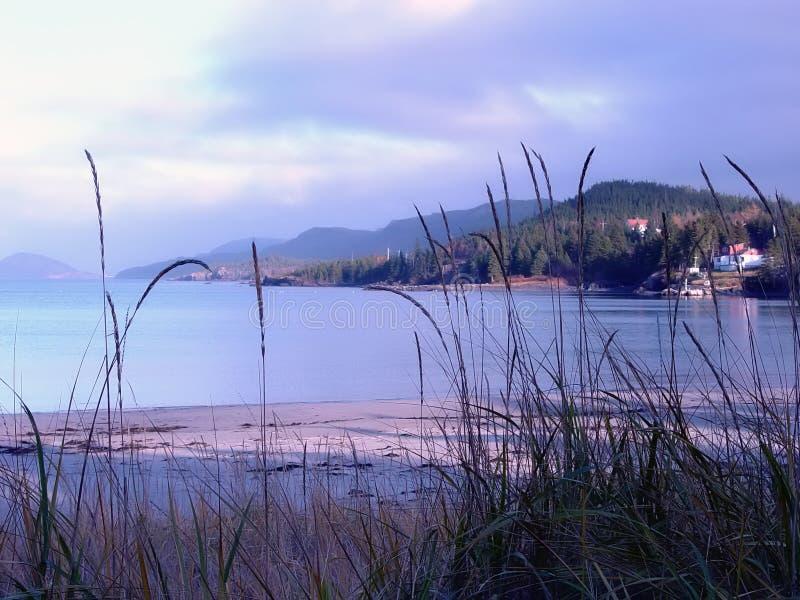 sandy na plaży obrazy stock
