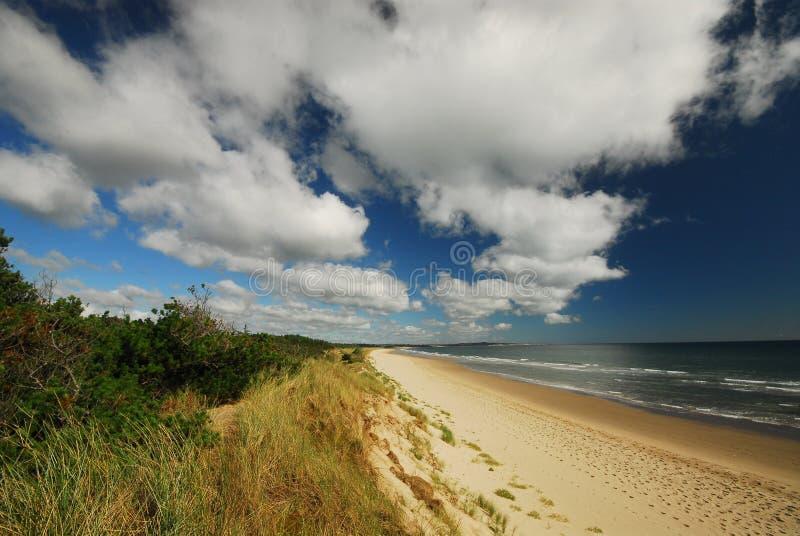 sandy na plaży obrazy royalty free