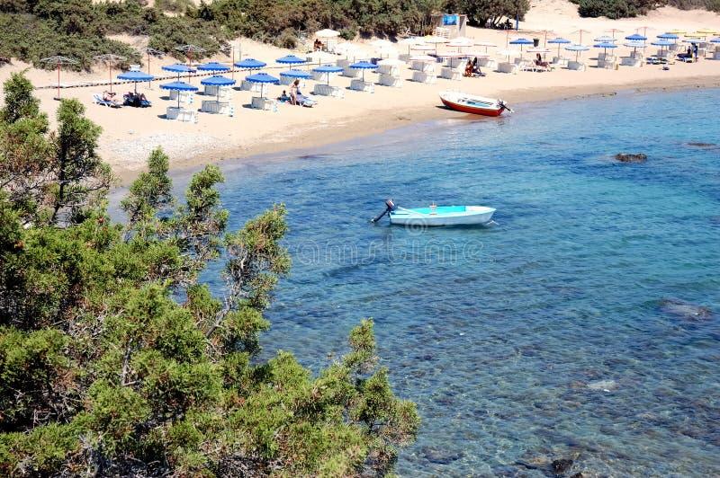 sandy na plaży zdjęcie stock