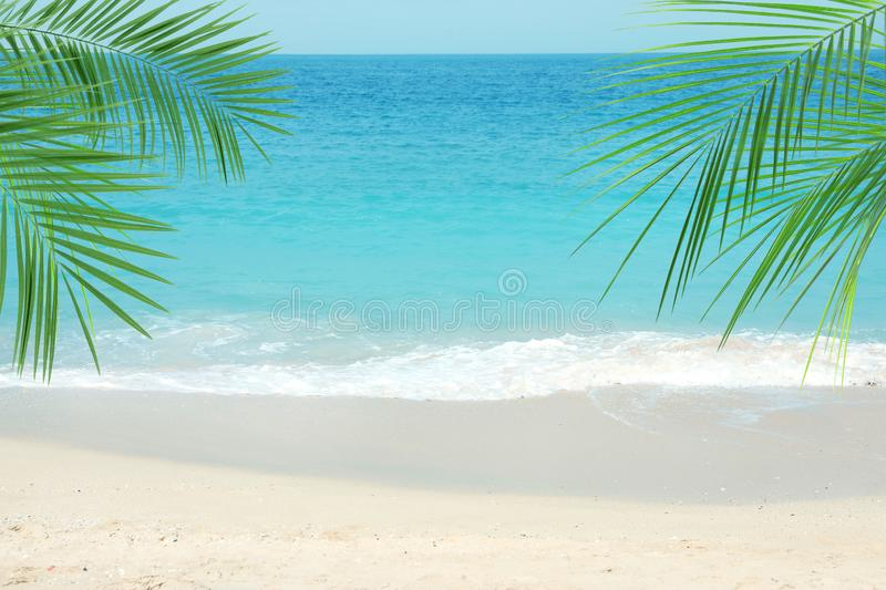 Sandy ocean beach and tropical palm leaves stock photo
