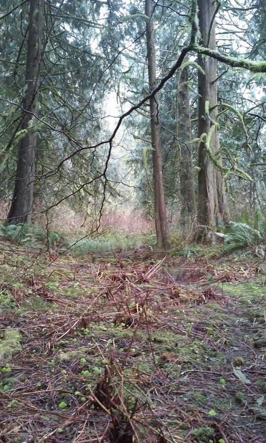 Sandy Oregon image stock