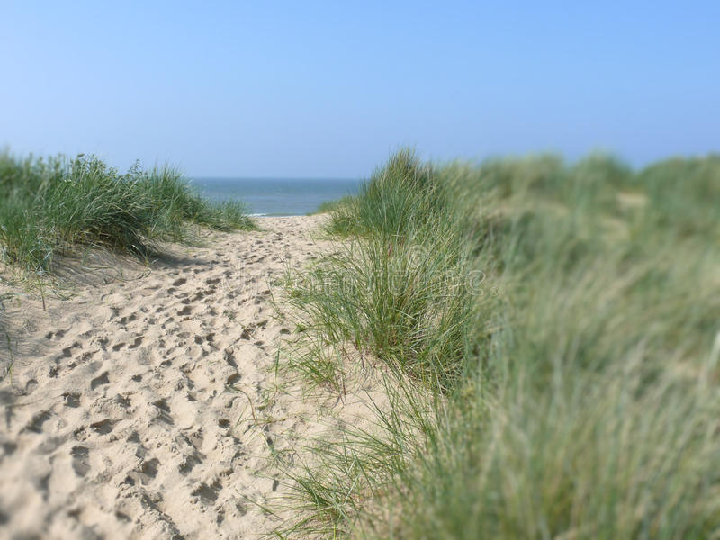 Download Sandy path to beach stock image. Image of dunes, nature - 13477159