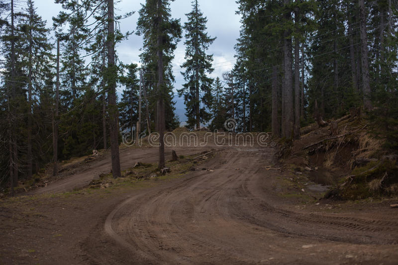 Sandy road by pine forest royalty free stock photos
