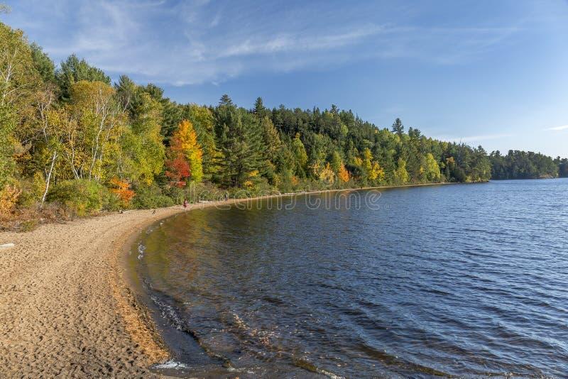 Sandy Shoreline di un lago in autunno - Ontario, Canada immagine stock libera da diritti