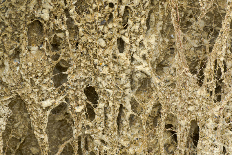 Download Sandy Soil With Twisted Roots Of Riverside Plants Stock Image - Image: 25069917