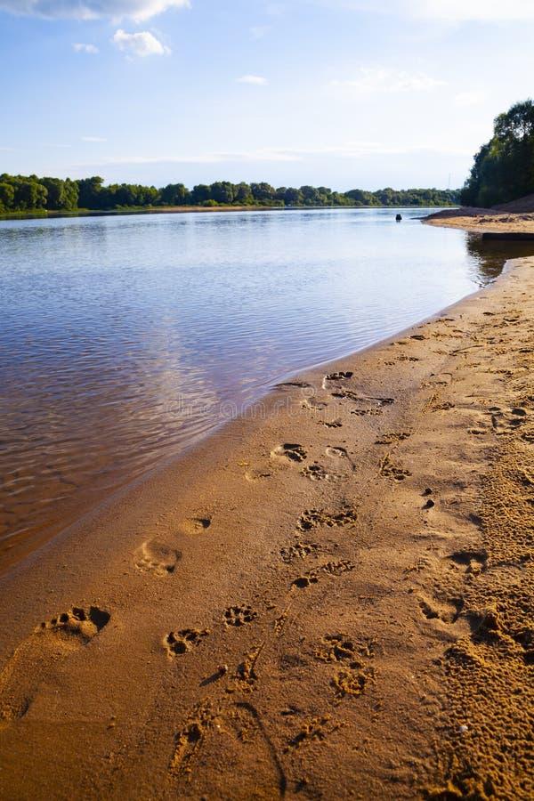 Sandy-Strand mit Abdrücken des Mannes und des Hundes lizenzfreie stockbilder