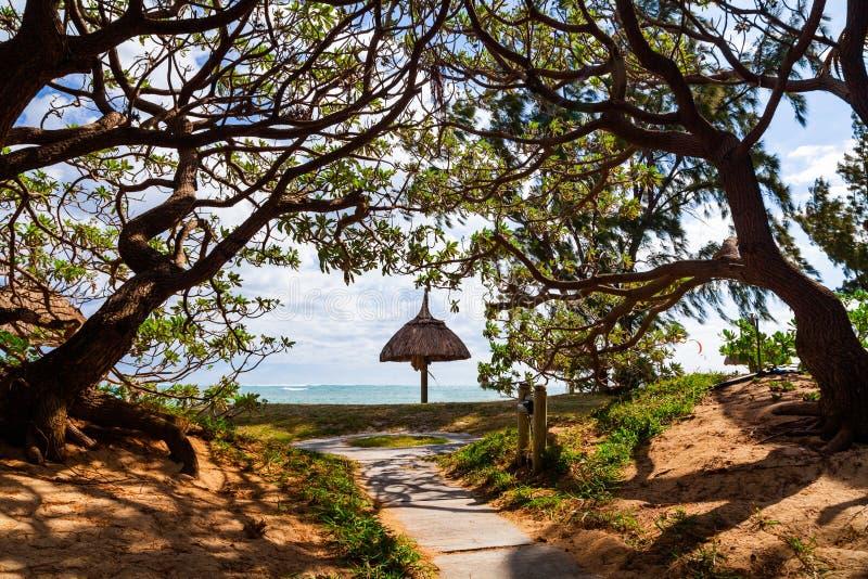 Sandy-Strand mit Palmen, Sonnenbetten und Regenschirmen wiedervereinigung lizenzfreies stockbild