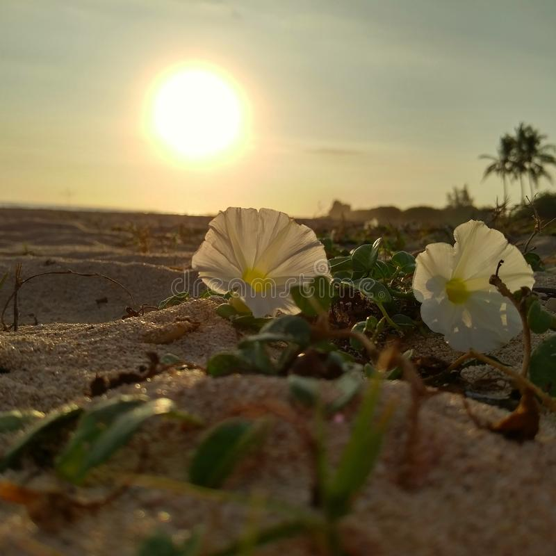 Sandy sunset. Hawaii Oahu sunset flowers sand beach ocean royalty free stock photo