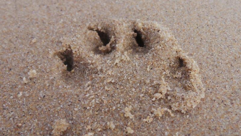 Sandy-Tatzen lizenzfreies stockfoto