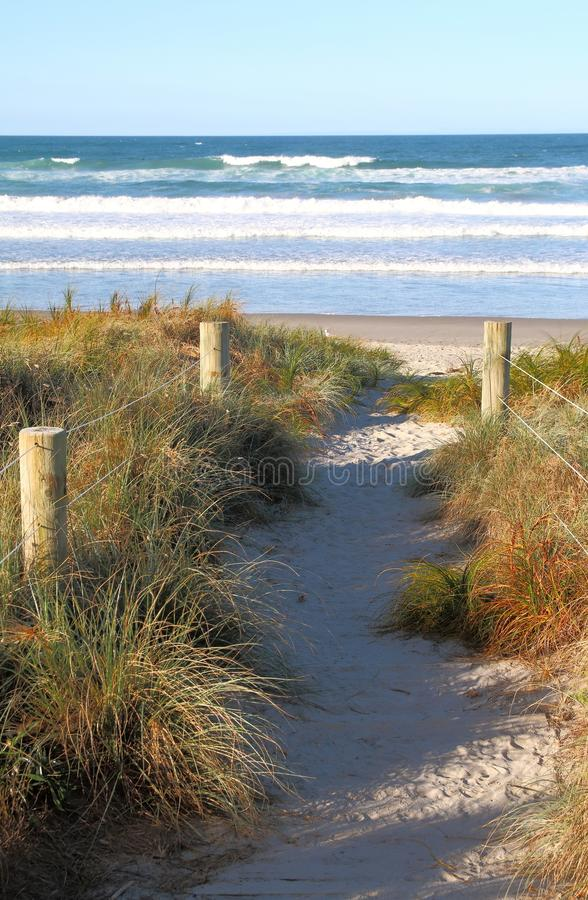Nj Bamboo Landscaping: To The Beach Stock Image. Image Of Shrubs, Plants, Dunes